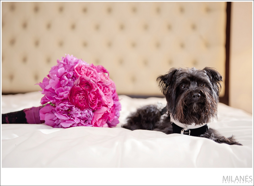 pink_wedding_bouquet_flowers_dog_bed_tuxedo